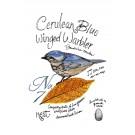 Bird204 Cerulean Blue Winged Warbler Bird Study