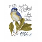 Bird210 Bluebird Bird Study Embroidery Design