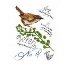 Bird211 Wren Bird Study Embroidery Design