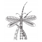 Dragonfly 3 Zen Garden Sketch Embroidery Design