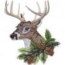 Buck Head 4