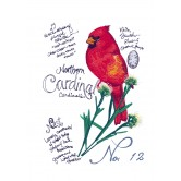 Bird Study Embroidery Design Collection