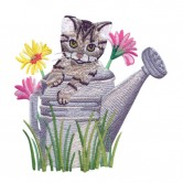 Kitten In Watering Can
